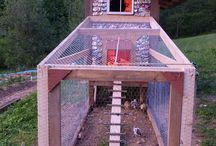 Chicken coop  / by Kim Steeves