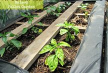 More - Gardening / Pins about gardening.