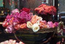 Suite501 | Paris | Florists / The best florists. Las mejores floristas.  www.albertalagrup.com
