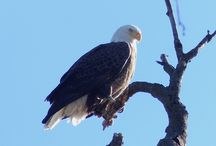 Wonderful Wildlife / From fox and eagles to snakes and osprey, the waterfront grounds at Glen Foerd on the Delaware are crawling with wonderful critters!  Glen Foerd on the Delaware is a public park and is open to public daily from dawn to dusk.