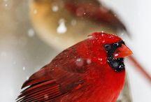 PTAKI / Ptaki z całego świata