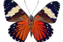 papillon_oiseaux