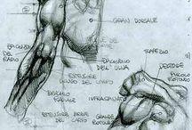 Draw Body
