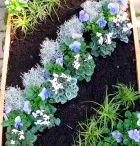 grabbepflanzung