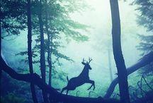 Природа, животные