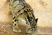 more beautiful big cats