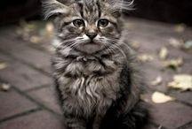 A- Кошки meow1