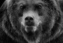 Tattoo Bear