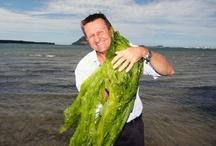 Algae and Seaweed Uses