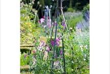 Cookery School Gardens / Our Gardens