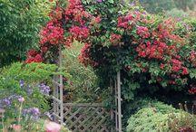 Cottage Garden Design Ideas