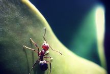 Insects/Small Creatures / by Jun Matsuo
