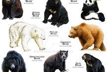 животные и звери в рисунке