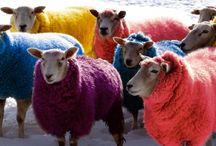 Goats and sheeps / I like to paint