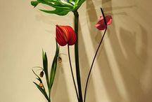 Ikebana / El arte floral de Japón, cerca de ti!
