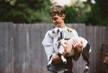 Animals in Weddings