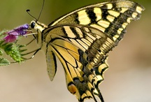 Delicate Wings: yellow