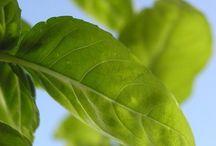Plantas e Receitas
