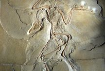 Paleonto-antropo-logia