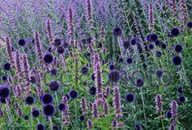 Beplanting: vaste planten