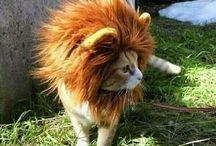 Cat in costumes