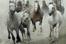 Cavalos / Esta pasta é para amantes de cavalos