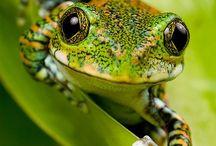 Amphibiens , lézards and co