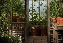 Greenhouses. Теплицы и оранжереи made by СпецПаркДизайн / теплицы оранжереи помидоры огурцы