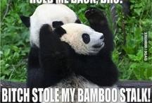 Animals Are Weird...