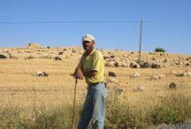 Çobanlar / Çobanlar kültürümüzün en önemli parçalarıdır. Çoban fotoğrafları