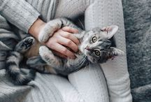 Gatos / Kot