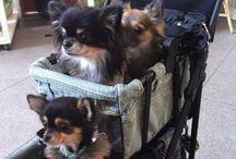 cani piccoli e grandi