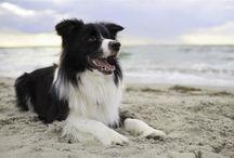 Cute Animal :: Cute Dogs