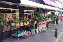 flower shops in holland / flower shops in holland | bloemenwinkels in nederland | blumenladen in holland | boutiques des fleurs aux pays-bas