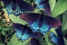 Butterflies (and moths)