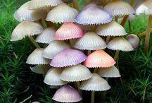 Musroom