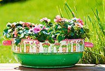 Kert, virágok / garden, flowers