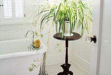 Plantes qui assainissent l'air de la maison