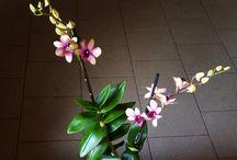 Garden - moje Orchideje / Moje vlastní orchideje. My own orchids