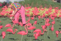 Pink Flamingos / by Goddess Lycia
