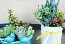 aes | plants