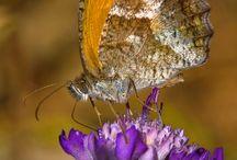 mariposas ♡