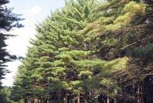 Green Pines / My Green Pines Romance series is set in the fictional town of Green Pines, somewhere in Illinois.  Here's what it looks like.