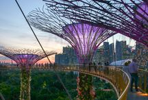 Singapore_Silvers