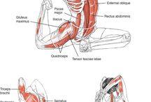 Anatomy of an Asana
