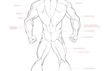Anatomy: Male drawing