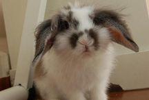 ウサギ / いろいろなうさぎ