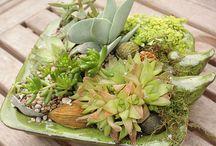Succulent ~ Succulents / by Hana J