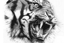Tigrisek / nagy.macskák.leopárdok.farkasok.