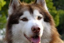 Animal - Dog, my favorite pet!
